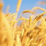 Vì Sao Nên Thử Bia Nhập Khẩu Làm Từ Lúa Mỳ ?